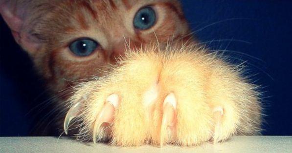 Focus sur les comportements inhabituels des chats