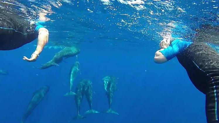 Nage avec les Dauphins : sorties en mer Méditerranée inoubliables !